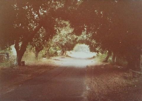 1982, רחוב החרובים